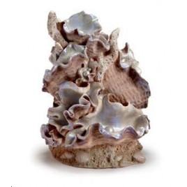 Reef One Ornament Clamshell Medium