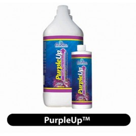 Purple Up 500 ml