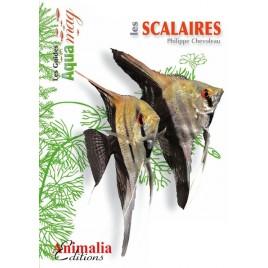 Guide Aquamag - Les scalaires