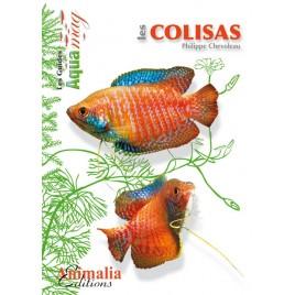 Guide Aquamag - Les Colisas