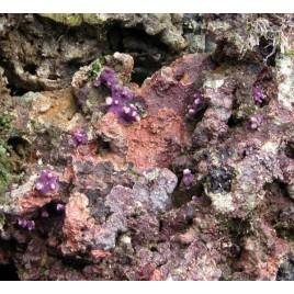10 kg de pierres vivantes d'Aquaculture d'Indonésie