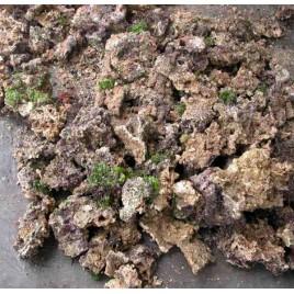 25kg de pierres vivantes d'Aquaculture d'Indonésie.