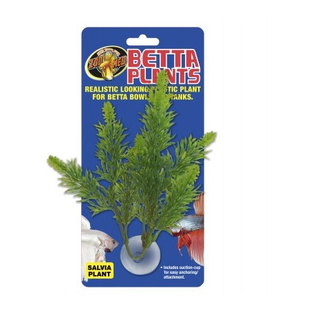 Zoomed betta plant salvia