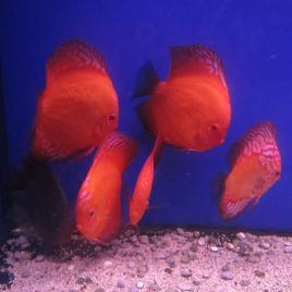 Discus assortis 10cm lot de 2