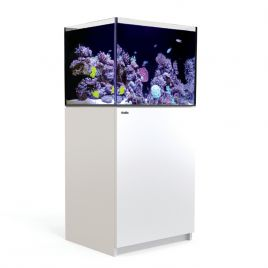 Reefer™ 170 Blanc (Aqua + mbl)