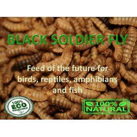 Black Soldier Fly larvae ( Larve de mouche soldat noire) Barquettes de 500 gr