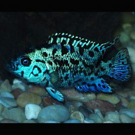 rencontres poissons en ligne