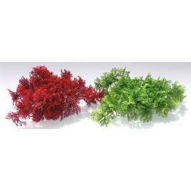 plante tropical moss H: 8cm 349637