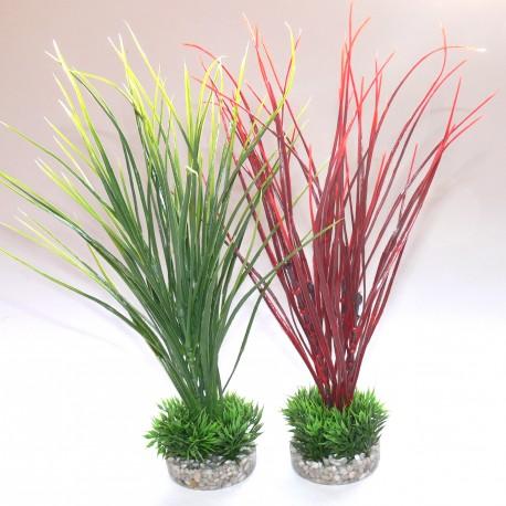 Plante acorus medium 349713 for Plantes decoratives interieur