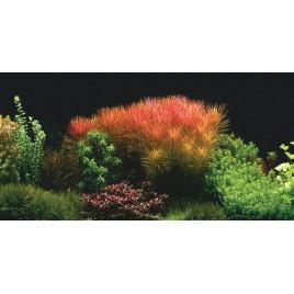 Poster 3D Blossom 120x50cm Aquatic Nature