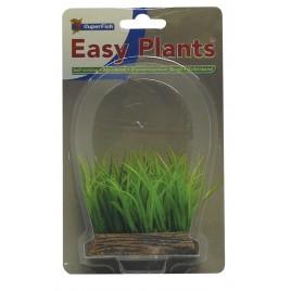 SF easy nano plants avant 6cm nr3