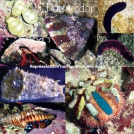 """Lot de détritivores N°9:""""Mangeurs d'algues pour aquarium de 50 à 150 L"""""""